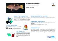 bodianus_perditio.pdf
