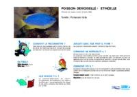 chrysiptera_taupou.pdf