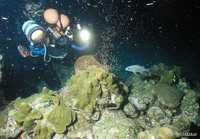 Plongeur coraux - Antilles 4_franck mazeas.JPG