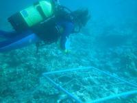 Plongeur - Juan de Nova 1_jp quod.jpg