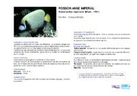 pomacanthus_imperator.pdf