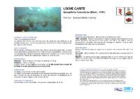 epinephelus_lanceolatus.pdf