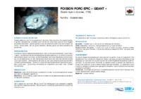 diodon_hystrix.pdf