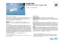 galeocerdo_cuvieri.pdf