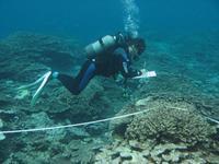 Plongeurs - La Réunion 2_jp quod.jpg