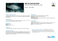 lethrinus_olivaceus.pdf