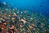 banc poissons 10-pierre-marin-razi-ffessm.jpg