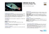 cetoscarus_bicolor.pdf