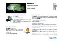 cheilinus_undulatus.pdf