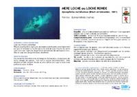epinephelus_malabaricus.pdf