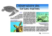 MAYOTTE Observatoire 2 (tortues).pdf