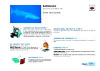 sphyraena_barracuda.pdf