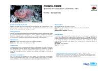 synanceia_verrucosa.pdf