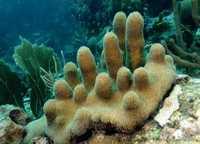 Corail - Antilles 5_franck mazeas.JPG
