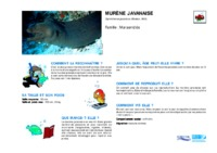 gymnothorax_javanicus.pdf