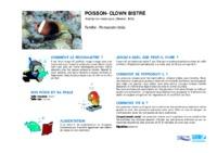 amphiprion_melanopus.pdf