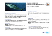 elagatis_bipinnulatus.pdf