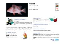 lutjanus_sebae.pdf
