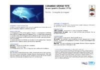 caranx_ignobilis.pdf