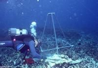 Plongeur - Mayotte 1_jp quod arvam.jpg