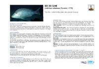 lethrinus_nebulosus.pdf