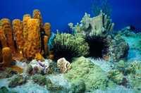 Paysage sous-marin - Antilles 2_franck mazeas.JPG